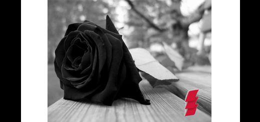 Rosa-negra
