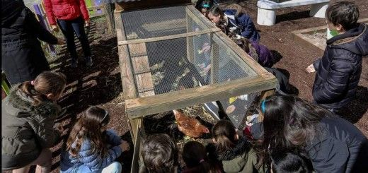 Un gallinero revoluciona la educación de un colegio de Valladolid